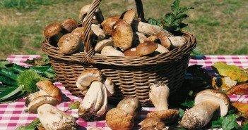 sagra del fungo porcino a oriolo: i funghi