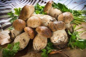vendita funghi Ronciglione